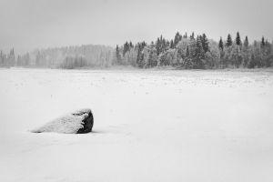 winter forest snow mist stone landscape