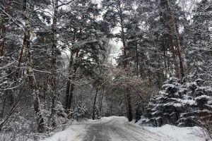 winter road snow trees