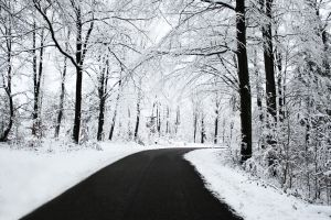 winter snow forest trees nature road