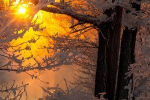 winter snow trees sunlight