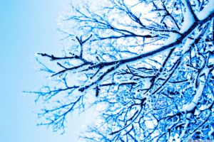 winter trees blue ice branch photography
