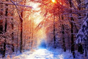 winter warm colors snow road forest
