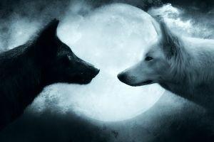 wolf artwork animals