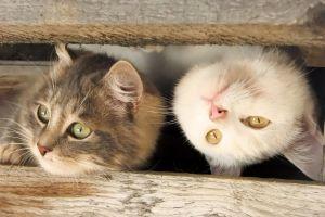 wood animals cats