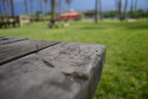 wood depth of field outdoors