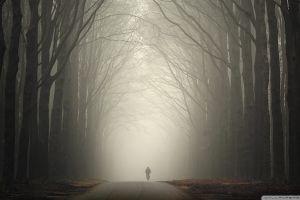 wood mist solice road