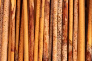 wood texture plants