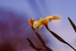 yellow flowers plants flowers