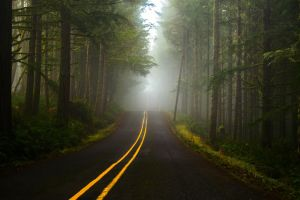 yellow grass branch road lines trees forest nature plants mist hills