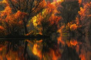 yellow leaves reflection trees colorful landscape lake water fall amber forest nature
