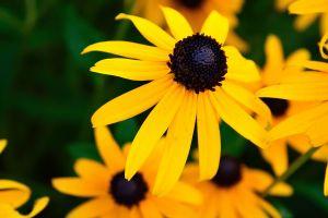 yellow nature yellow flowers flowers hdr macro