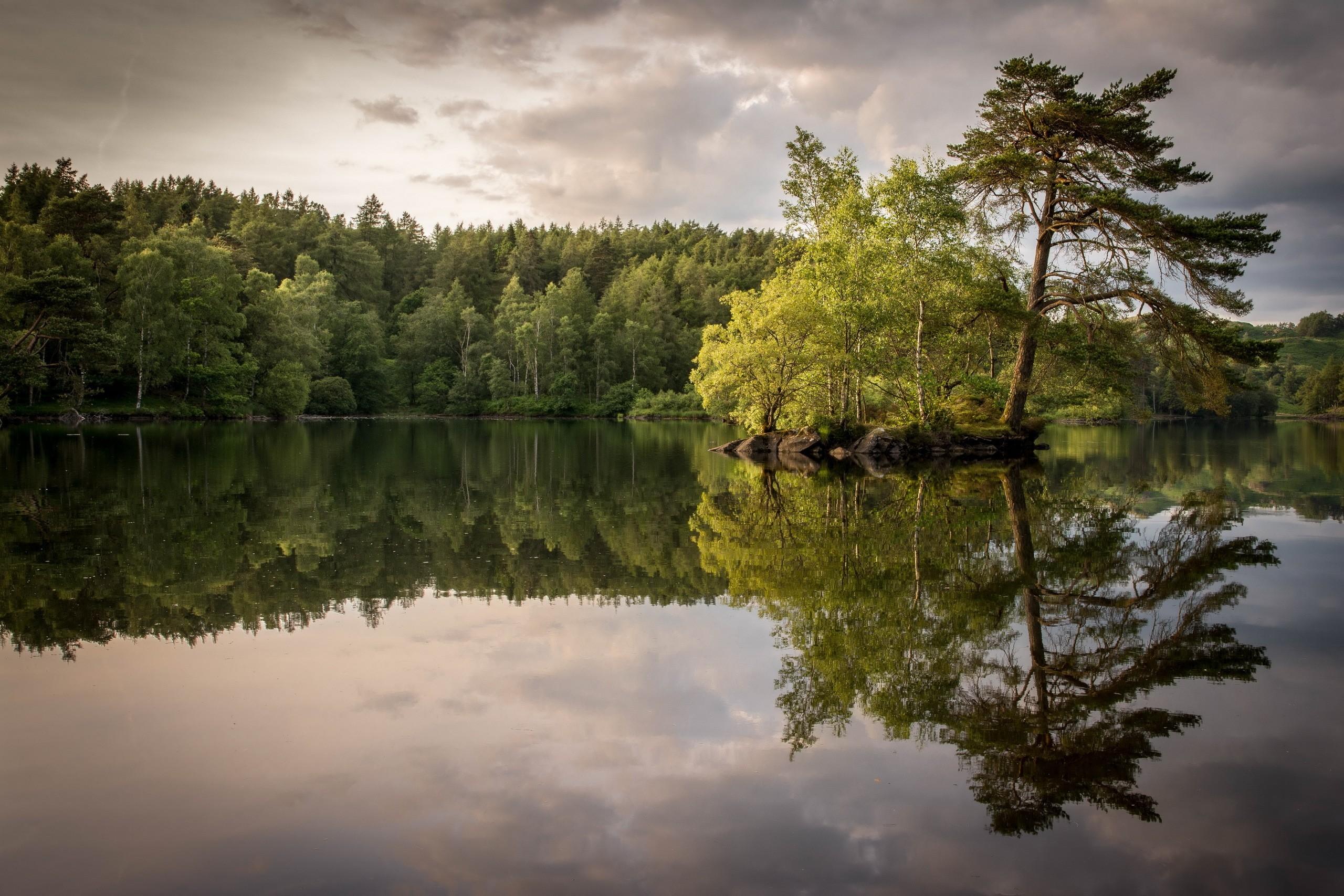 trees pine trees reflection lake