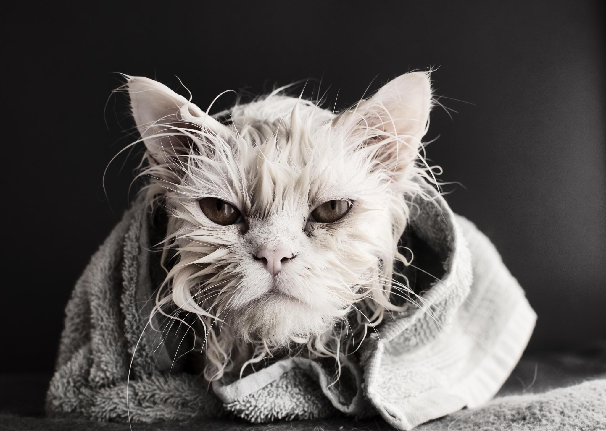 wet cats bath towel animals